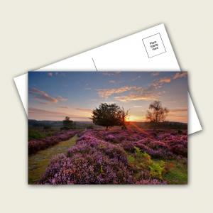 380mic Pulp Postcards